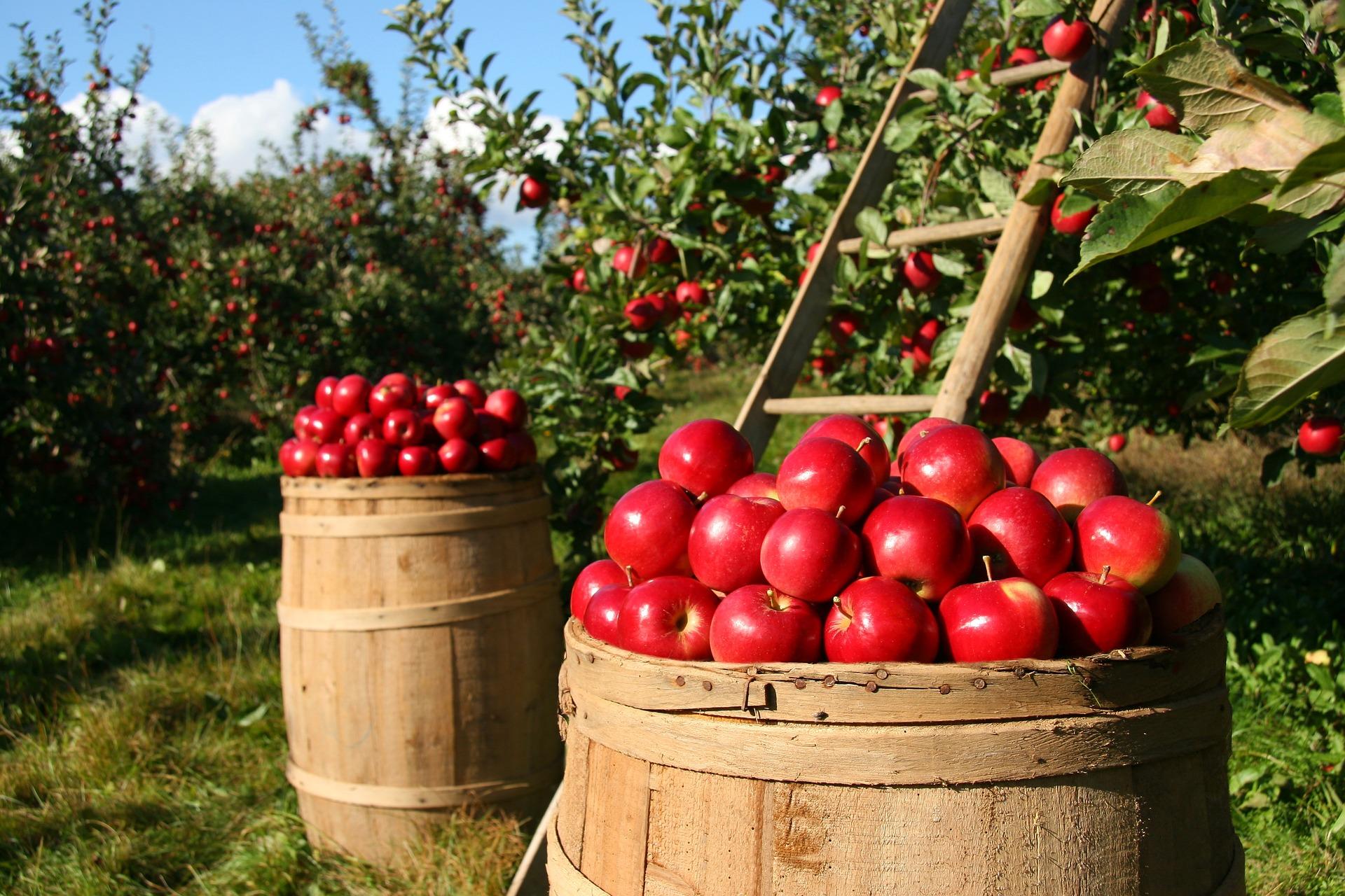 Obst und Gemüse Wirtz in Bockum und Hüls